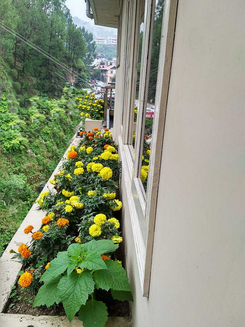 balcony-flower